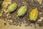 7 benefits of cacao